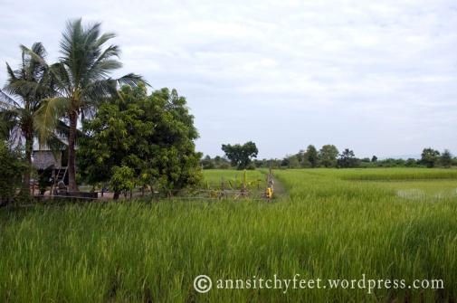 Cambodia_Pursat2198